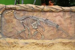 Model Dinosaur fossil on the wall