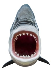 Model of shark with open mouth closeup. Isolated on white. Path included.