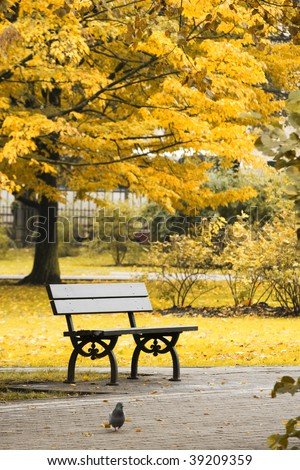 modern black bench in autumn central park