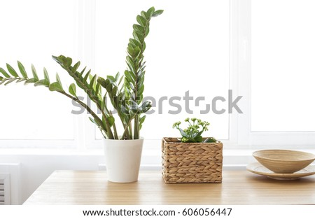 Modern clean interior with plant #606056447