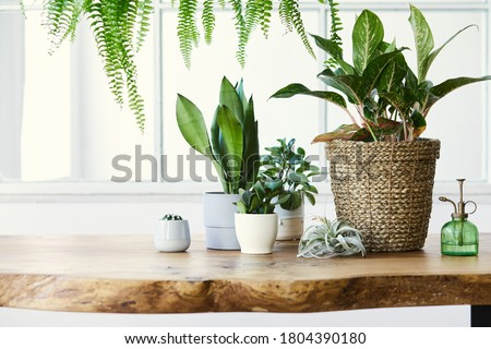 Photo of  Modern composition of home garden filled a lot of beautiful plants, cacti, succulents, air plant in different design pots. Stylish botany interior. . Home gardening concept. Template.