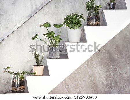 Modern composition of home garden. Stairs filled a lot of differents plants. Grey backgrounds wall.
