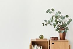 Modern composition of living room interior with design wooden bookcase, eucalyptus leaf in vase, book, decoration, glassy ball and copy space on the white wall. Template.