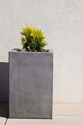 Modern concrete flower pot on front porch of a house. Rectangular prism or cuboid shape with young thuja plant.