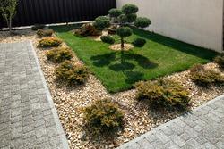 Modern  conifer tree garden design. Front yard landscape. Modern Garden design with large stones. Cloud pruned topiary tree.