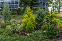 Modern garden design Coniferous plants in the garden.  An example of landscaping from coniferous ornamental plants.