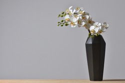 Modern geometric black vase with orchid flower on gray background
