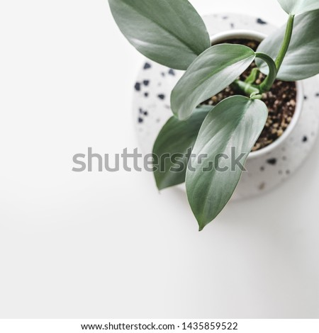 Modern houseplants on a terrazzo board on a white background, minimal creative home decor concept, top view with copy space, Philodendron Hastatum #1435859522