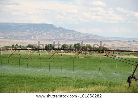 Modern Irrigation System Watering A Farm Field Of Carrots In Late ...