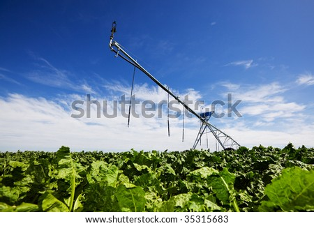 Modern irrigation tool in a turnip field low view angle