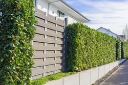 Modern landscaping with a cherry laural hedge