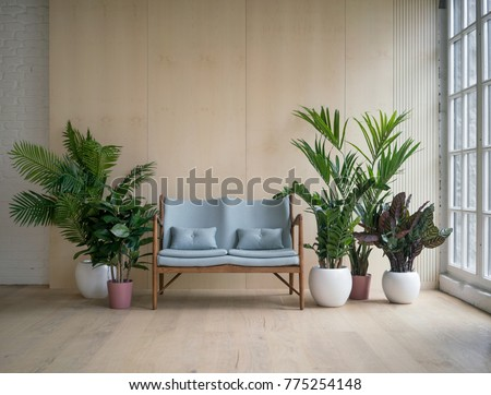 Modern loft living room with plywood wall and wooden floor, light blue retro sofa with pillows and green tropical fern plants near low sill window. Mock up interior photo simple urban jungle style