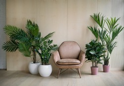 Modern loft living room with plywood wall and wooden floor, retro brown leather armchair and green tropical fern plants in pots near low sill window. Mock up interior photo simple urban jungle style