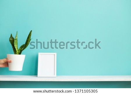 Modern room decoration with Picture frame mockup. White shelf against pastel turquoise wall with hand putting down potted snake plant.
