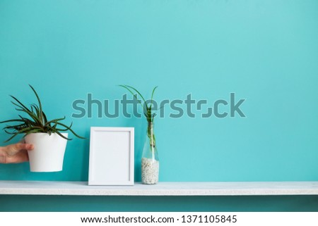 Modern room decoration with Picture frame mockup. White shelf against pastel turquoise wall with spider plant cuttings in water and hand putting down succulent.