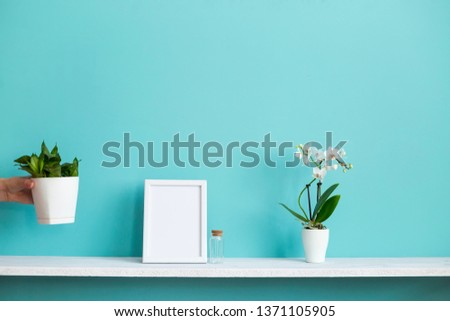 Modern room decoration with Picture frame mockup. White shelf against pastel turquoise wall with potted orchid and hand putting down snake plant.