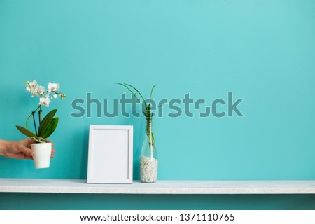 Modern room decoration with Picture frame mockup. White shelf against pastel turquoise wall with spider plant cuttings in water and hand putting down orchid.