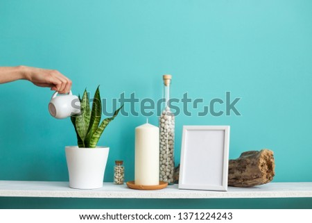 Modern room decoration with Picture frame mockup. White shelf against pastel turquoise wall with Candle and rocks in bottle. Hand watering potted snake plant