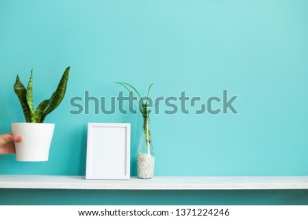 Modern room decoration with Picture frame mockup. White shelf against pastel turquoise wall with spider plant cuttings in water and hand putting down snake plant.