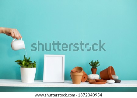 Modern room decoration with picture frame mockup. White shelf against pastel turquoise wall with pottery and succulent plant. Hand watering potted snake plant.