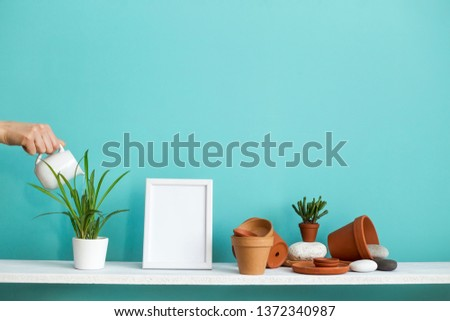 Modern room decoration with picture frame mockup. White shelf against pastel turquoise wall with pottery and succulent plant. Hand watering potted spider plant.