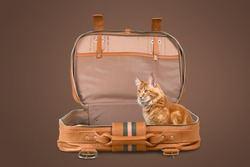 Modern suitcase, a domestic cute cat lies comfortably. Trip with an animal. Journey.