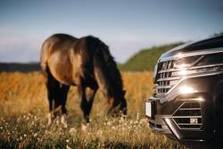 Modern suv car near horse