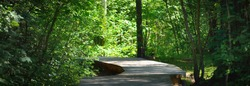 Modern winding wooden footpath (boardwalk) through the green deciduous trees in the forest. Latvia. Idyllic landscape. Natural tunnel. Bicycle, sport, nordic walking, eco tourism, environment
