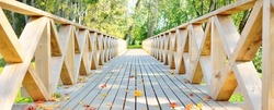 Modern wooden footpath (boardwalk) through the green deciduous forest on a clear day, colorful maple leaves close-up. Sunlight and shadows. Recreation, environment, eco tourism, vacations in Latvia