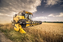 Modern yellow combine harvesting wheat in the summer in Czech Republic South Moravia before the rain. Agricultural machine harvester working in the field.