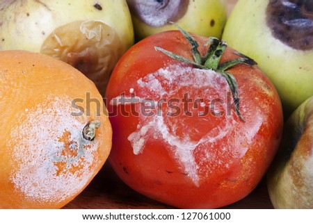 modly fruits