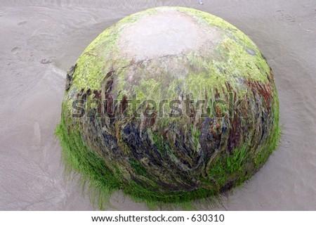 Moeraki Boulders 4