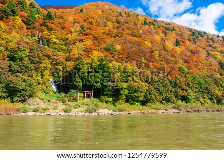 mogami river and autumn leaves, yamagata, japan ストックフォト ©