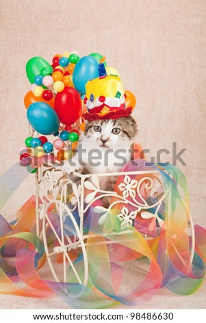 Moggie kitten sitting inside miniature cart with fake balloons and tie-dye ribbon