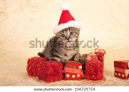 Kittens Wearing Santa Hats Moggie Kitten Wearing Santa