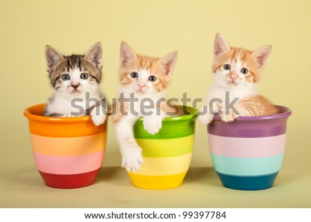 Moggie kittens sitting in colorful pots on green background