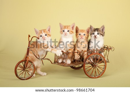 Moggie kittens sitting in miniature rustic cart wagon on yellow green background