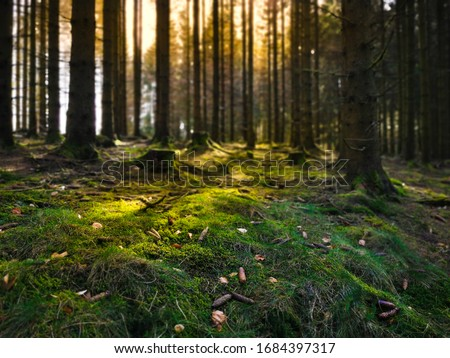 Moist forest floor with moss. The tree trunks cast shadows in the sunlight. A good place for forest bathing. Brilon, Sauerland. Photo stock ©