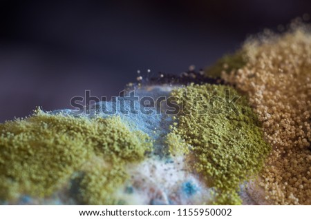 Mold colony on a bread