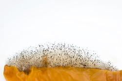 Mold, fungus grown on food