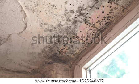 Mold growth. Damp walls, ceiling, window frames and glass in home. Molds thrive on moisture and reproduce by means of tiny, lightweight spores that travel through the air
