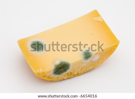 Mold on cheese