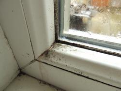 Mold on plastic window frame