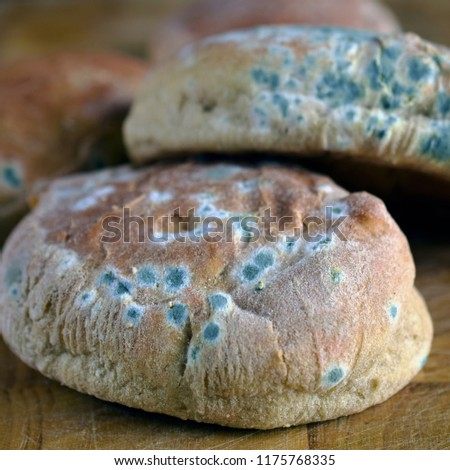 Moldy inedible food. Mold on bread. Square shape image.