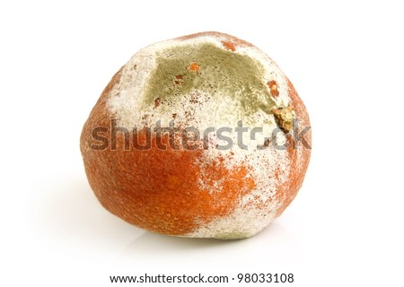 Moldy rotten orange on a white background