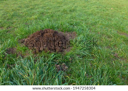 mole hole on the green grass in fall time with copy space Stock fotó ©