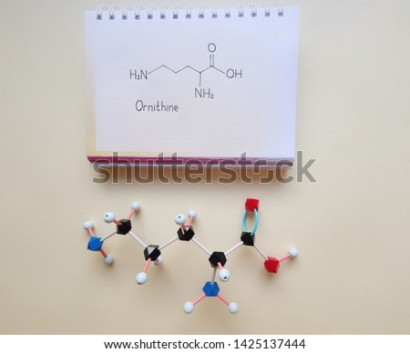 Molecular structure model and structural chemical formula of ornithine molecule. Ornithine is a non-essential amino acid that plays a central role in the urea cycle. Black=C, red=O, blue=N, white=H.