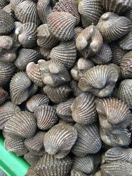 Molluse on market