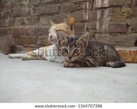 Mom cat and her kitten relaxing on concrete floor.  Animal lover.