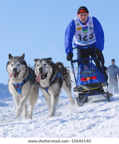 Moment caught on photos - dog sled